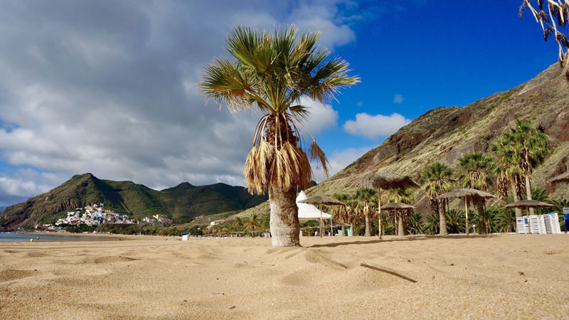 Plage-Palmier-Tenerife-Iles-Canaries
